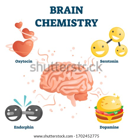 Brain chemistry vector illustration. Labeled educational happiness chemicals collection. Oxytocin, serotonin, endorphin and dopamine substances as human emotions. Animated various positive reactions.