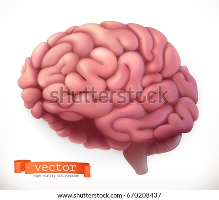 Brain. 3d vector icon.