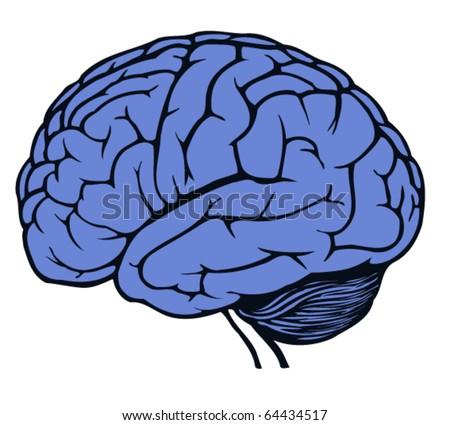 brain for web design