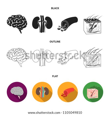 Brain, kidney, blood vessel, skin. Organs set collection icons in black,flat,outline style vector symbol stock illustration web.