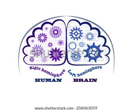 Right Cerebral Left And Right Cerebral