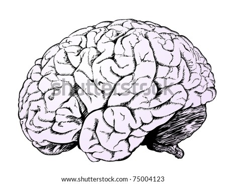 Brain of the person with a considerable quantity of convolutions