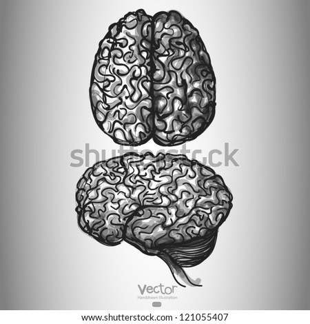 Brain. Set of Two Views. hand drawn