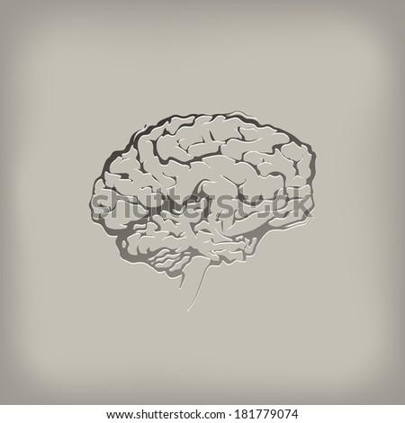 Brain. Vector format