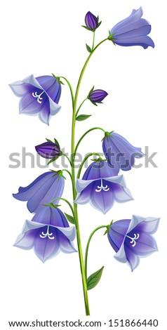 branch blue hand campanula bell