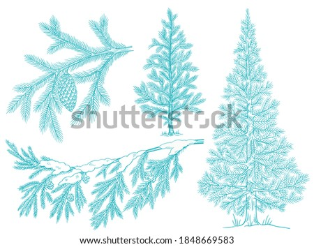 Branch christmas tree set with snow. Conifer spruce. Frosty winter. Fir-tree for postcard background. Hand drawn contour vector sketch. Fir cone.
