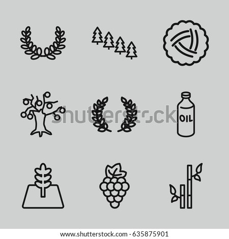 branch icons set set of 9
