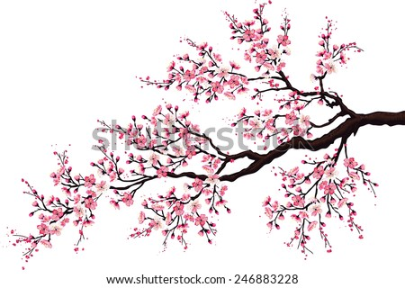 branch of a blossoming cherry