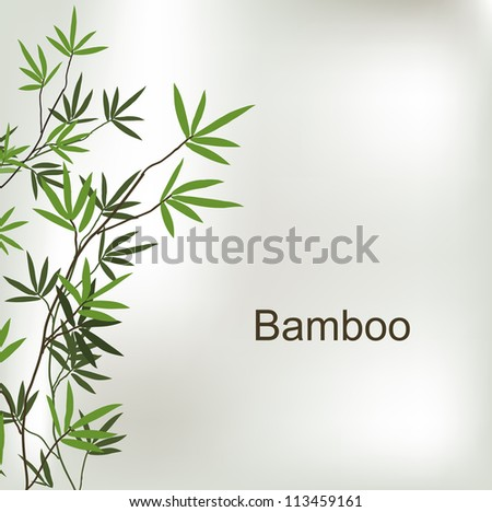 branch of bamboo  vector