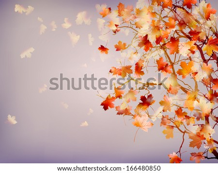 branch of bright autumn maple