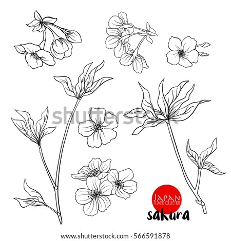 Branch of cherry blossoms, japanese cherry. Stock line vector illustration botanic flowers. Outline drawing.