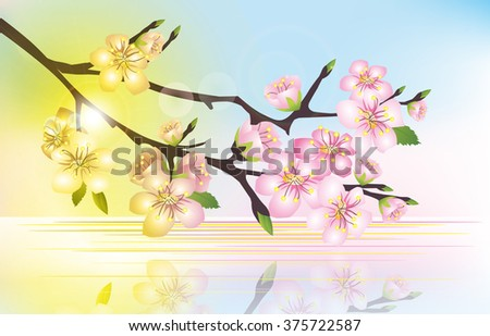 branch of cherry blossoms over