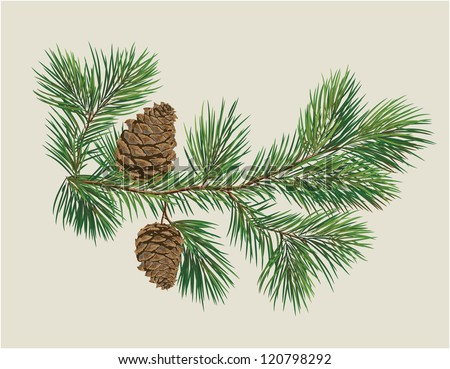 Branch Of Christmas Tree With Pine Cones Illustration
