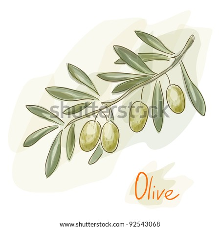 Branch of green olives. Watercolor style. Vector illustration.