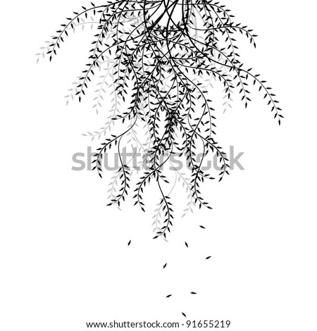 Branch of willow isolated on white background