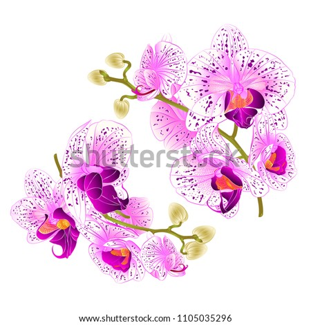 branch orchids   purple and