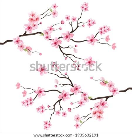 branch tree vector illustration