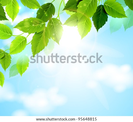 branch with green leaves hanging from the tree
