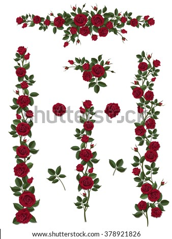 branches climbing red rose