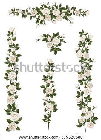 branches climbing white rose