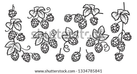 Branches of hops. Set of elements for brewery design. Hop cones with leaves icons. Hand drawn vector illustration isolated on white background.