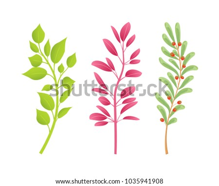 branches of natural plants with