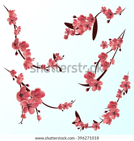 branches of pink blossoming