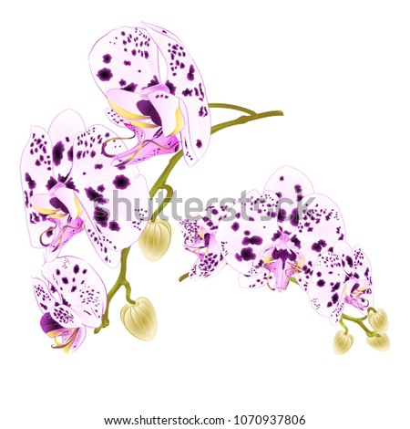 branches orchids dots purple