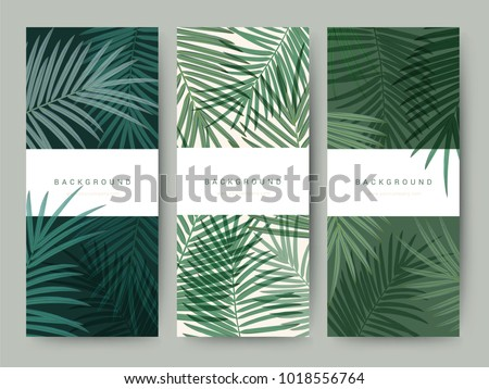 stock-vector-branding-packaging-palm-coconut-bamboo-tree-leaf-nature-background-logo-banner-voucher-spring