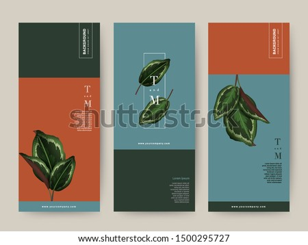 Branding Packaging tropical plant leaf summer pattern background, for Spa, Resort Cosmetic Luxury hotel, logo banner voucher, fabric pattern, organic texture. vector illustration.