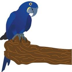 Brazil parrot in wild nature