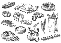Bread vector hand drawn set illustration in graphic style. Other types of wheat, flour fresh bread. Vector hand drawn vintage engraving illustration for poster, label and menu bakery shop