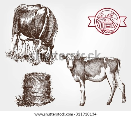 breeding cows set of sketches
