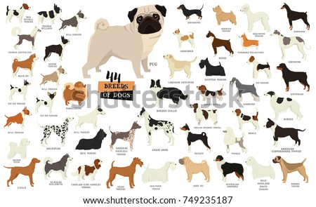 breeds of dogs isolated objects