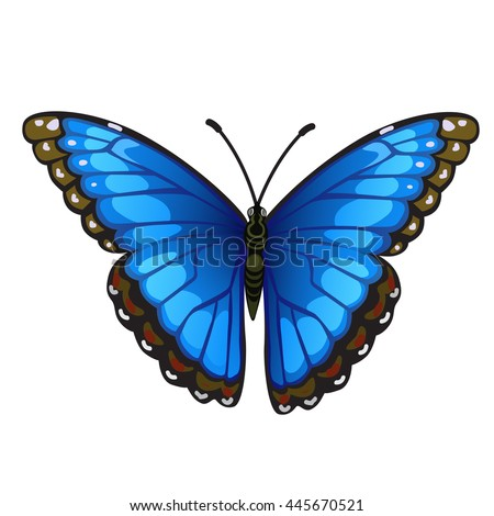 bright butterfly isolated on