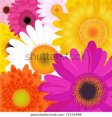 bright flowers  isolated on