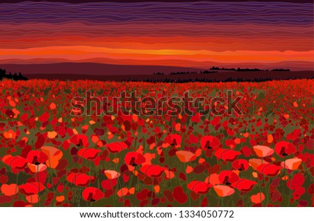 bright poppy field with sunset