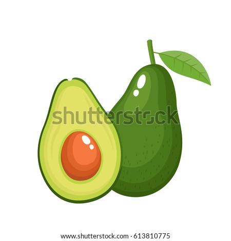 Bright vector illustration of colorful half and whole of fresh avocado. Fresh cartoon avocados isolated on white background.