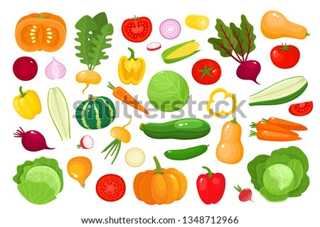 Bright vector illustration of colorful vegetables. Fresh cartoon organic vegetable isolated on white background used for magazine, book, poster, card, menu cover, web pages. #1348712966