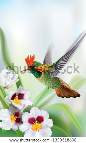 Brightly colored hummingbird tufted coquette Lophornis ornatus in flight from above over white orchids. Vector curves and mesh illustration