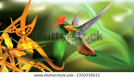 Brightly colored hummingbird tufted coquette Lophornis ornatus in flight from above over yellow orchids. Vector curves and mesh illustration
