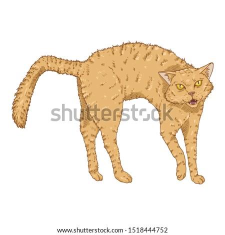 Bristling Cat. Vector Cartoon Furious Feline Illustration