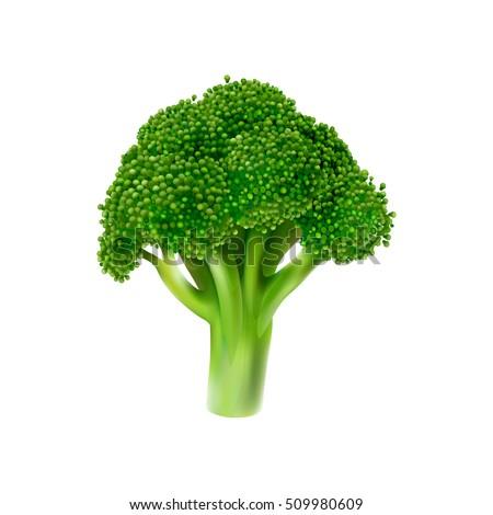 Broccoli Vector Illustration