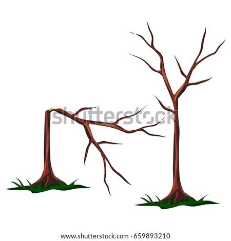 Broken leafless sapling tree isolated on white background. Vector cartoon close-up illustration.