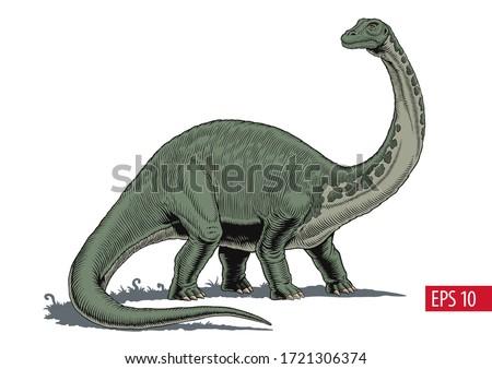 Brontosaurus or diplodocus dinosaur, comic style vector illustration