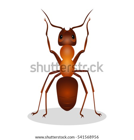 brown ant isolated on white