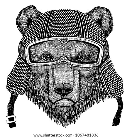brown bear russian bear animal...