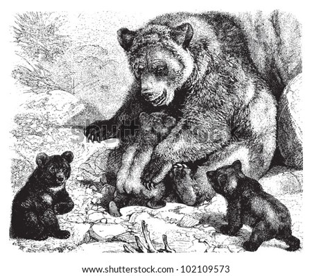 Bear Images Stock Photos amp Vectors  Shutterstock