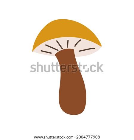 brown cap boletus flat