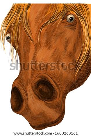 brown horse face portrait of a